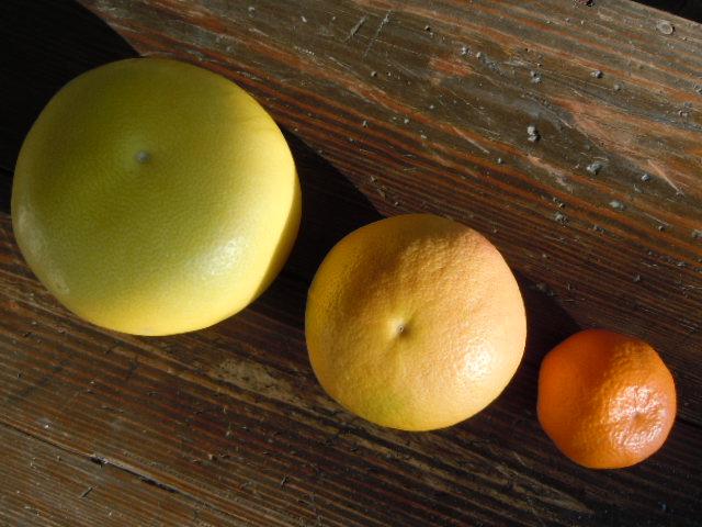 Ca Citrus