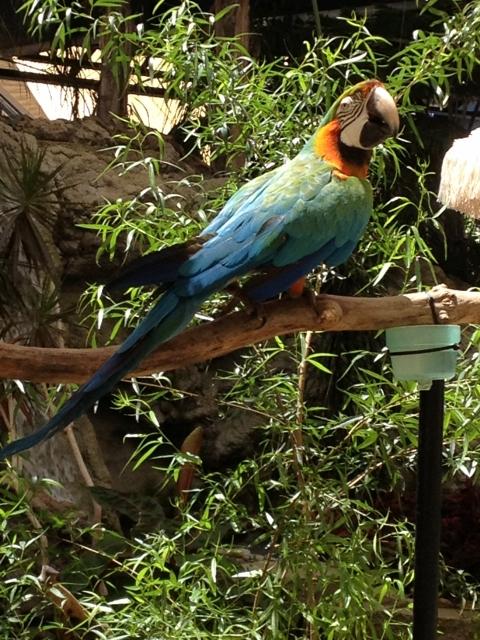 Sacramento Zoo Birds