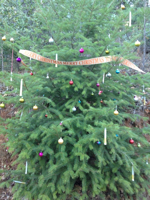 Hiking Trail Christmas Tree