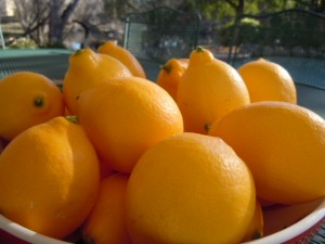 Meyer's Lemon